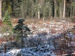 snow on ground of woods