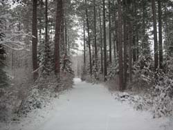snow covering path in the woods
